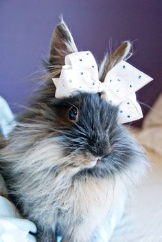 Luna, my new lionhead bunny....just had to show you this!!