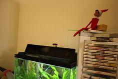 #elf on a shelf - #Christmas