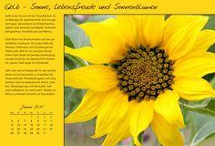 """Wandkalender """"Farben und Ihre Bedeutung"""", Kalenderblatt Januar: Gelb - Sonne, Lebensfreude und Sonnenblumen"""