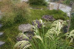 Natives - Xanthe White Moss Garden, Garden Plants, Landscape Drawings, Landscapes, Outdoor Landscaping, Landscaping Ideas, Natural Contour, White Gardens, Native Plants