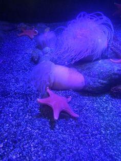 Sea star habitat, Aquarium of the Pacific in Long Beach, CA. Long Beach, Wonderful Places, Fun Activities, Habitats, Aquarium, California, Sea, Goldfish Bowl, Aquarium Fish Tank