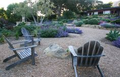 Montecito landscape, drought tolerant, garden design ideas, montecito landscape contractors, santa barbara landscaping, crushed stone, patios, gravel, mexican sage, nepeta, eye of the day, stone fountain, agave, olive trees, blue spires salvia