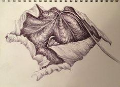 Leaf sketch - nicky heard biro drawing sketches, pen drawings, leaves s Biro Drawing Sketches, Pen Drawings, Art Sketches, Biro Art, Leaves Sketch, Natural Form Art, Gcse Art Sketchbook, Leaf Drawing, A Level Art