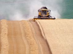 """A powerful new technique for generating """"supercharged"""" genetically modified organisms that can spread rapidly in the wild has caused alarm among scientists who fear that it may be misused, accidentally or deliberately, and cause a health emergency or environmental disaster."""