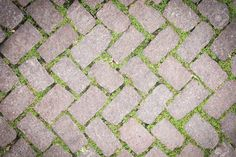 Picture of Grass Stone Floor texture pavement design stock photo, images and stock photography. Pavement Design, Stone Pavement, Stone Floor Texture, Stone Flooring, Landscape Architecture, Grass, Photoshop, Stock Photos, Garden