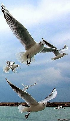 #istanbul #martı #seangull Nantucket, Landscape Art, Birds In Flight, Art Pictures, Pet Birds, Animals And Pets, Istanbul, Places To Visit, Martha's Vineyard