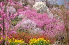 The Spring at Fukusima by kazumi Ishikawa, via 500px