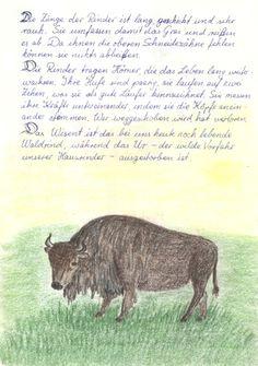 Waldorf ~ 4th grade ~ Human & Animal ~ Bull ~ main lesson book