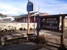 Meeker traffic jam is sheep going down the main highway!