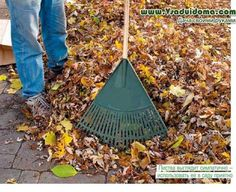 куда девать листву деревьев фото