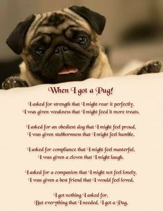 Explore our website for more info on pug dogs. It is a superb place to find out more. Pug Quotes, Animal Quotes, Life Quotes, Animal Pics, Book Quotes, Qoutes, Pug Love, I Love Dogs, Pug Breed