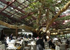 Fig Tree restaurant brasil   Restaurant Figueira Rubaiyat — Sao Paulo, Brasil