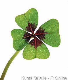 Die 17 Besten Bilder Von Kleeblatt Leaf Clover Good Luck Und Best