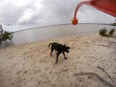 #pet #dog #loveher #kelpie #lab #labrador #black #followforfollow #follow #followme #baby #adventure #dogs #kelpiexlab #australia #aus #queensland #girl #cute #dogsofinsta #instadog by trailsofzoe