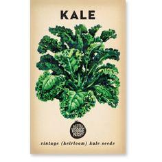 Heirloom Veggie Seeds - Kale Green