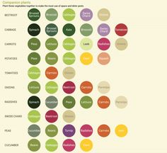 An Infographic Tells You What Vegetables to Grow