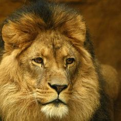 Not many things quite as majestic as this. Such a shame. #ripcecil