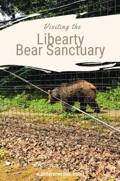 The Libearty Bear Sanctuary in Zarnesti, Romania, offers a permanent home to injured or once mistreated brown bears that can not return to the wild. Romania People, Elephant Nature Park, Visit Russia, Trans Siberian Railway, Wild Creatures, Short Trip, Walking Tour, Historical Sites, Travel With Kids