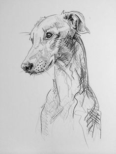 Art by Lucy Wilson - Day # 36 - Graphite on Card by Lucy Wilson, New . - Art by Lucy Wilson – Day # 36 – Graphite on Card by Lucy Wilson, New … – Illustration meets - Pencil Drawings Of Animals, Animal Sketches, Art Sketches, Art Drawings, Graphite Drawings, Drawings Of Dogs, Dog Pencil Drawing, Pencil Art, Greyhound Kunst