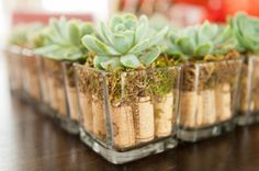 $2.15 per centerpiece for wine country themed wedding. Succulent sits atop 9 wine corks and moss. (Succulents were found on craigslist for $1 each, moss and square vases from dollar store, and wine corks were collected from friends).
