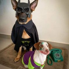 #dog #dogs #dogsofinstagram #doglife #doglovers #doglover #dogslover #dogoftheday #dogmom #dogsofinsta #dogphotography #dogvideos #dogsitting #doglove #dogtraining #dogwalker #dogstyle #puppylove #pet #dogplay #dogplaytime #pupper #puppylove #puppylover  #ilovemydog #dogandpals #pup #pets #doghouse #dogdays Dog Photography, Shepherd Dog, Dog Life, Dog Mom, Dog Days, Puppy Love, Dog Training, Knight, Dog Lovers