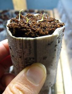 How to Make Newspaper Seedling Pots. You can get a jump start on the growing season by planting seeds indoors, where it is warm and not subject to freezing temperatures. Biodegradable pots are a great way to start seedlings, because you. Container Gardening, Gardening Tips, Allotment Gardening, Organic Gardening, Paper Pot, Diy Garden Projects, Seed Starting, Planting Seeds, Biodegradable Products