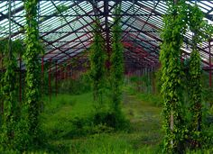 Vine Covered Entrance Of Old Jersey Greenhouse | Love's Photo Album
