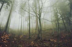 morning fog by Day--Dream.deviantart.com on @deviantART