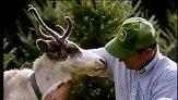 Reindeer 101 for Children