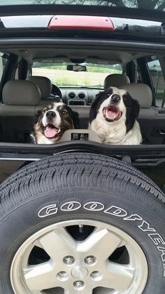 Bentley Bear and Tucker ready for a ride in momma's new Jeep!