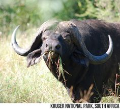 What a face!!  Daily Destination: Kruger National Park, South Africa