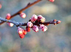 A venit primăvara! Paradis, Salvia, Mai, Terrariums, Green, Plant, Sage
