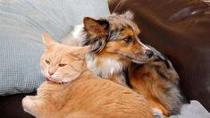 Come scegliere una pensione per cani e gatti