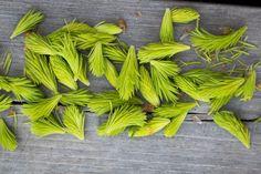 Villiruoat ovat vallanneet maailman parhaiden ravintoloiden ruokalistat. Ruoan puhtaus puhuttaa maailmalla. Voisiko villiyrteistä, sienistä ja marjoista olla Suomen seuraavaksi vientivaltiksi?