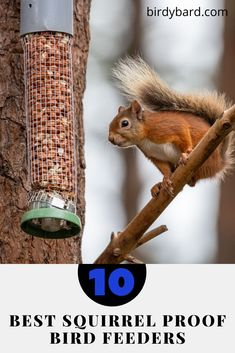 Are you bothering day by day on a squirrel in your bird feeders? Want to get rid of them so that birds especially, small birds not get bothered. Basically, you have to choose the best bird feeders and keep it in your backyard. Unique Bird Feeders, Best Bird Feeders, Squirrel Proof Bird Feeders, Pet Feeder, Small Birds, Rid, Backyard, Pets, Animals And Pets