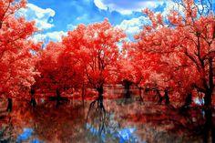 A Red Path by helios-spada.deviantart.com