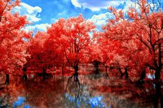 color infrared: A Red Path by *helios-spada on deviantART