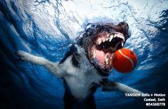Casteel has flown to Australia to do diving dog portraits.