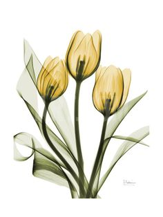 Golden Tulips Art Print by Albert Koetsier at Art.com