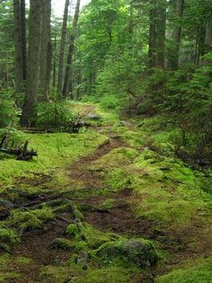 Cathedral Woods, Monhegan Island- walked there and saw MANY fairy houses!!