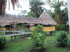Iquitos, Cumaceba lodge. TREES.