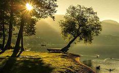 Trees: Foundations for Ecosystems and Learning Sunrise Landscape, Summer Landscape, Sunrise Images, Sunrise Wallpaper, Nature Wallpaper, Hd Wallpaper, Scenery Paintings, Landscape Photography Tips, John Muir