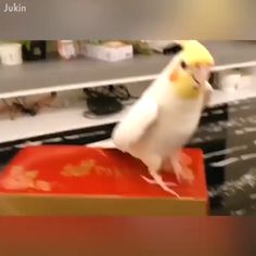 - Funny Duck - Funny Duck meme - - The post appeared first on Gag Dad. Funny Birds, Cute Birds, Pretty Birds, Cute Funny Animals, Cute Baby Animals, Beautiful Birds, Animals Beautiful, Animals And Pets, Cute Animal Videos