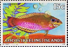Cocos Keeling Islands 1979 Fishes SG 38 Pink Wrasse Fish Fine Mint Scott Other Cocos Keeling Island Stamps HERE