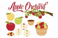 Apple Branch & Basket Vector by Kelly Jane Creative on Creative Market