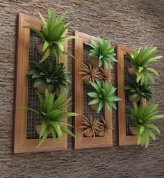 Inspiring Beautiful Minimalist Vertical Garden For Your Home Backyard goodsg. Inspiring Beautiful Minimalist Vertical Garden For Your Home Backyard Hanging Succulents, Succulents Garden, Succulent Frame, Hanging Planters, Air Plants, Indoor Plants, Backyard Plants, Green Plants, Indoor Garden