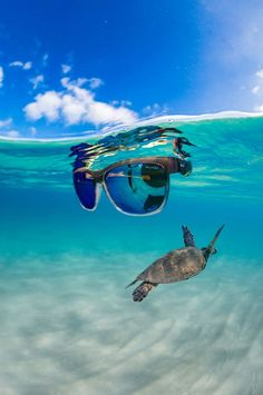 Bomber Eyewear sells Polarized Floating Sunglasses, Safety Sunglasses, and much more. See why everyone is buying Sunglasses from Bomber Eyewear. Buy Sunglasses, Sports Glasses, Ocean Life, Island Life, Diving, Eyewear, Surfing, Paradise, Shades