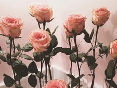 grafika rose, flowers, and pink Peach Aesthetic, Flower Aesthetic, Aesthetic Indie, Korean Aesthetic, Tumblr Roses, Peach Tumblr, Style Hipster, Hipster Vintage, No Rain