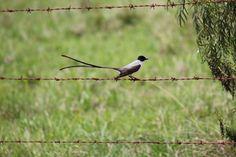 Walking Bird! Pássaro andando!