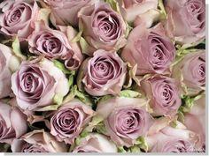 roze rozes - Google Search